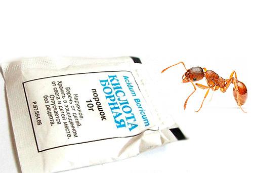 Домашнее средство от муравьёв.