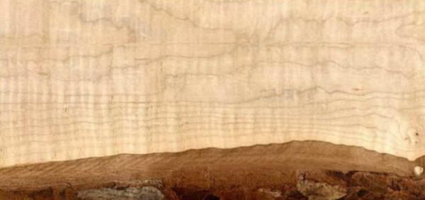 Характерный рисунок липовой древесины.