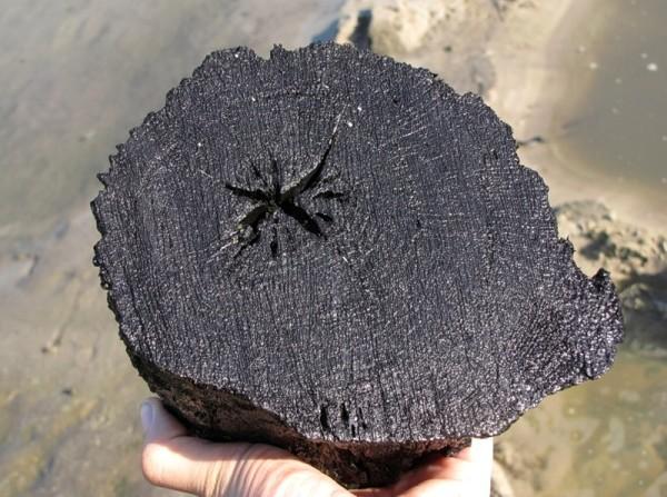 Мореный дуб.