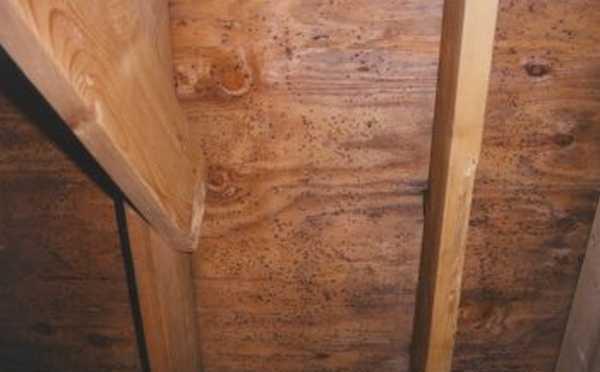 На фото хорошо видны следы деятельности грибка.