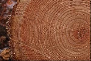 Настоящий природный цвет данной породы древесины