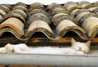 Не стоит забывать про изготовление водосточных желобов, которые позволят сделать отвод влаги от строения
