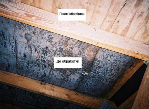 Обработка древесины помогает избавиться от плесени