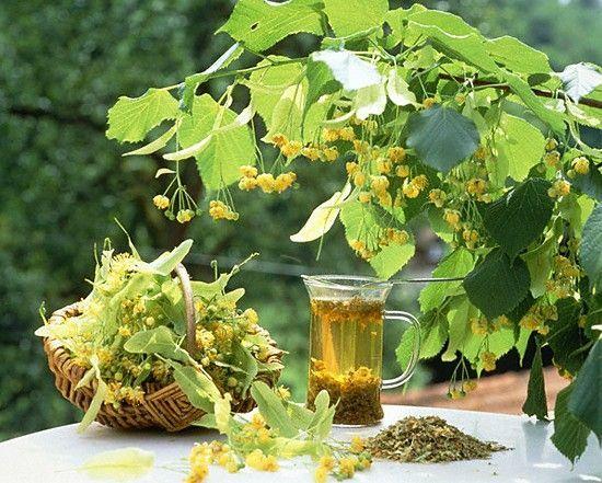 Природа – это кладезь витаминов и полезных веществ