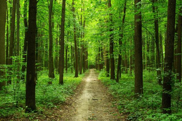 Прогулка по лесу закрепит эффект после парной