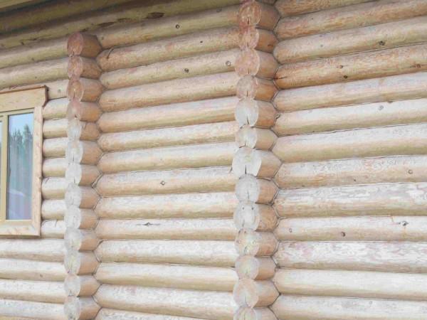Стена из оцилиндрованного бревна