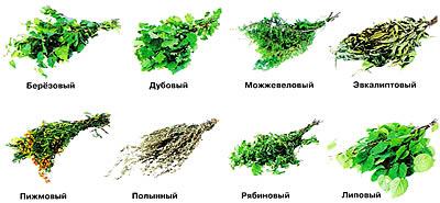 Веники делают из разных деревьев