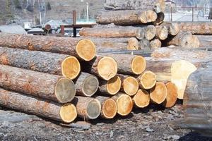 Заготовкой древесины лучше заниматься с ноября по март.