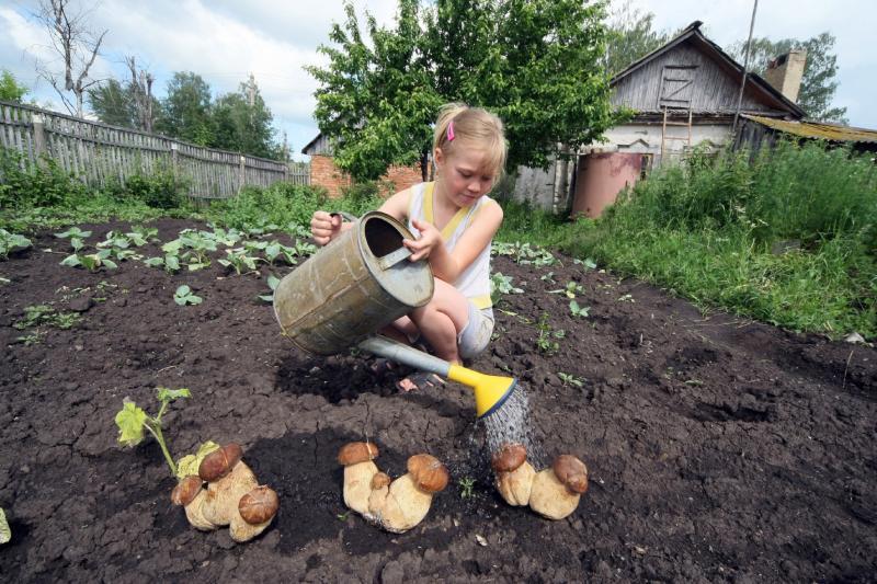 Для выращивания лесных грибов нужен качественный и своевременный полив