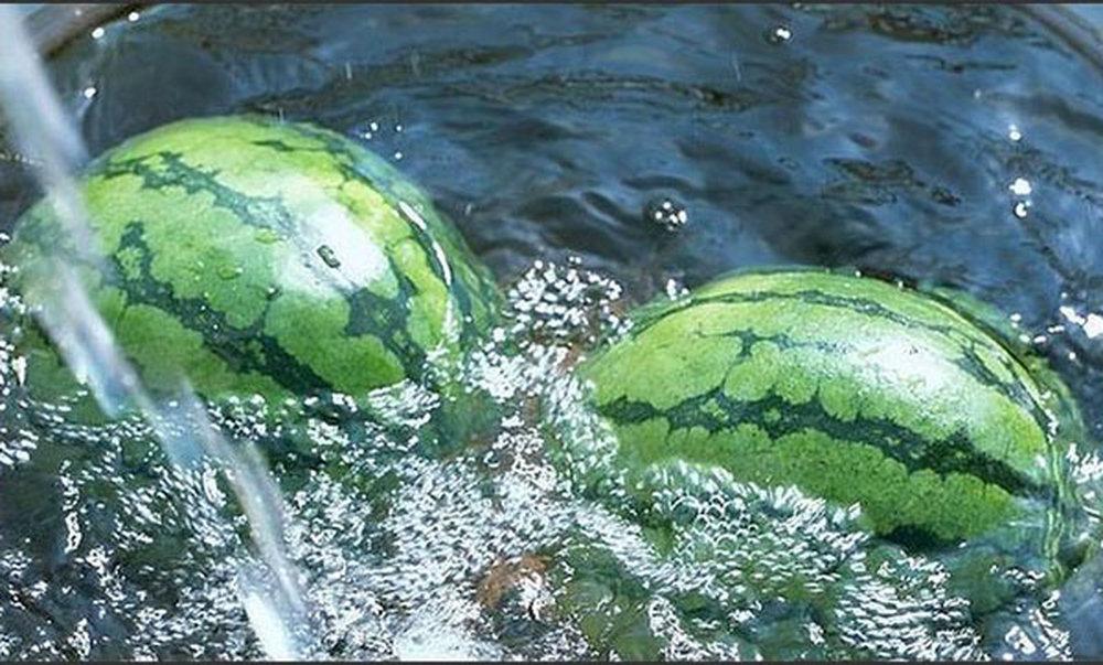 Дозревший арбуз в воде остается на плаву