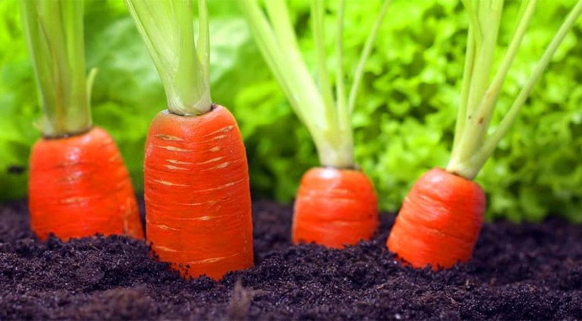 Выращиваем овощи с детьми картинки