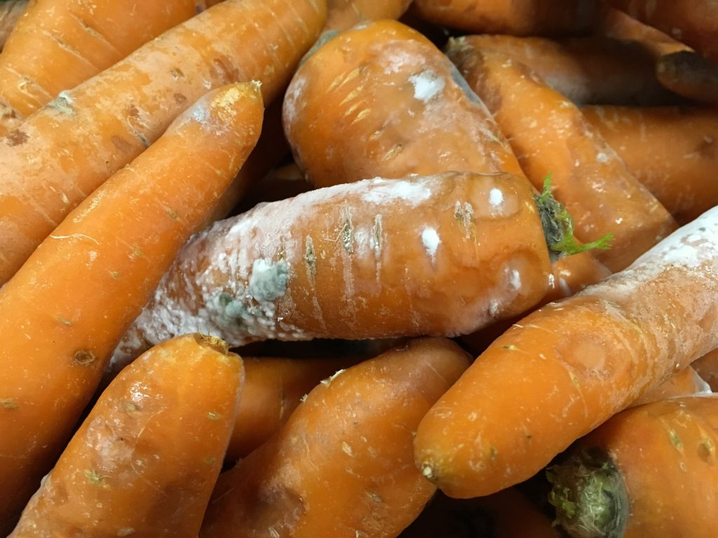 Морковь при хранении может гнить