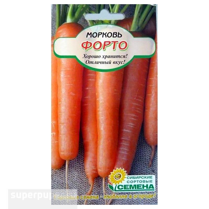 Сорт моркови устойчив к белой гнили