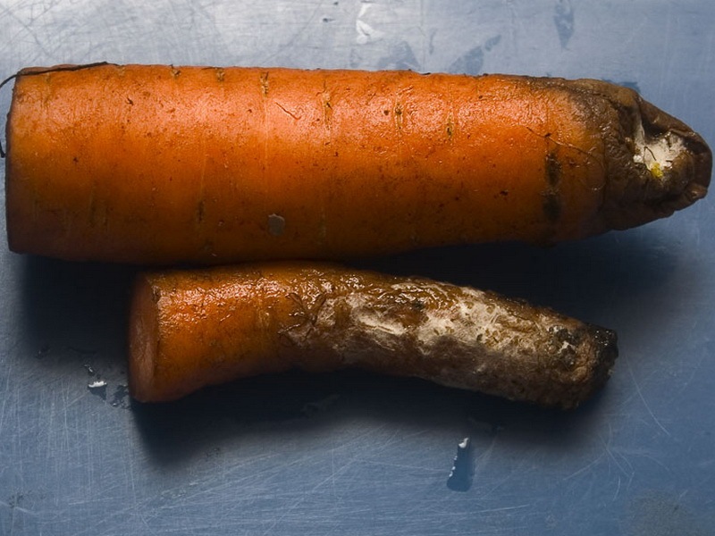 Серую гниль на моркови можно избежать еще во время выращивания