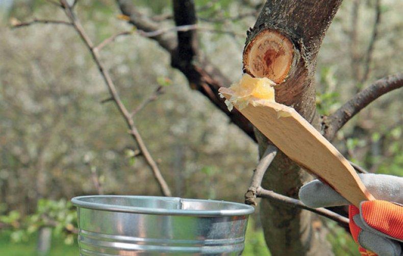 Садовым варом заделываем все срезы и трещины в дереве