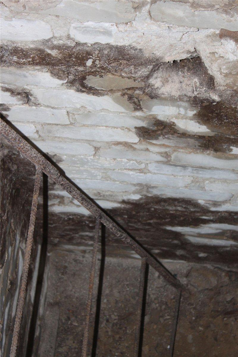 борьба с грибком в подвале
