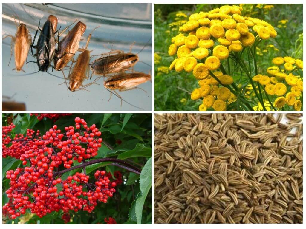 Растения и их запах отпугнут тараканов