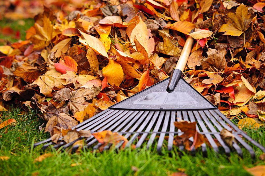 Опавшие листья могут пригодиться на даче