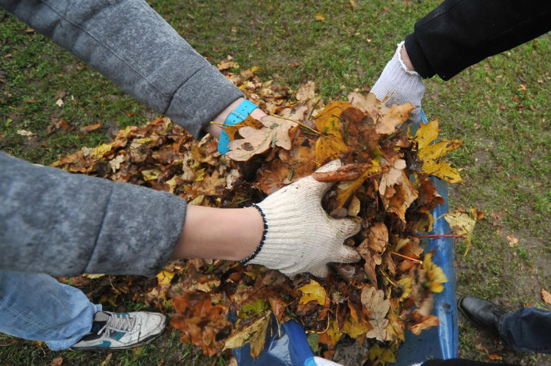 Листья на даче полезны для улучшения структуры почвы