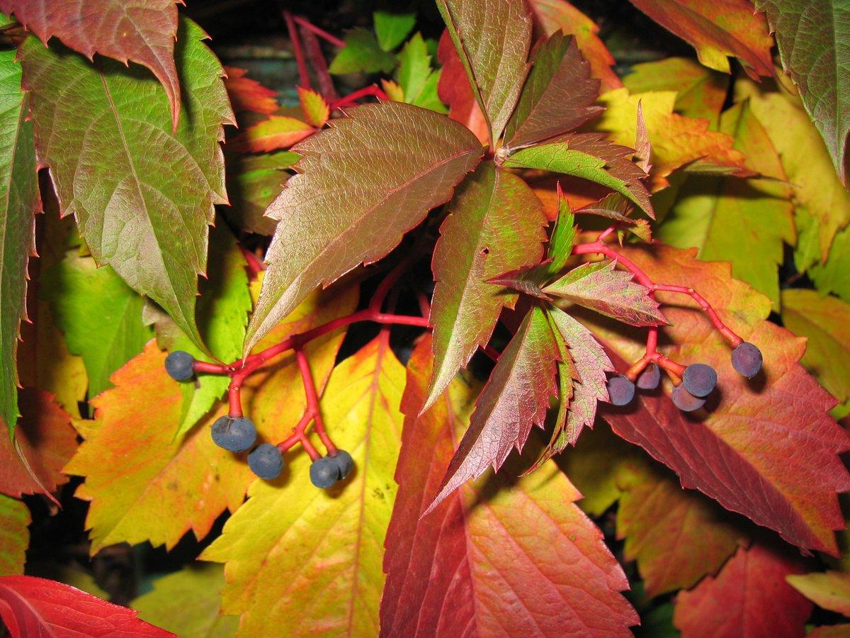 Листья с кустарников лучше измельчить перед внесением в почву