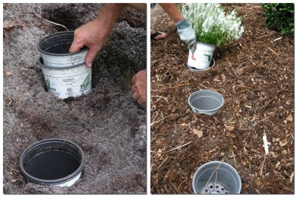 С помощью пластиковых емкостей, вкопанных в грядку можно регулярно менять ландшафтный дизайн