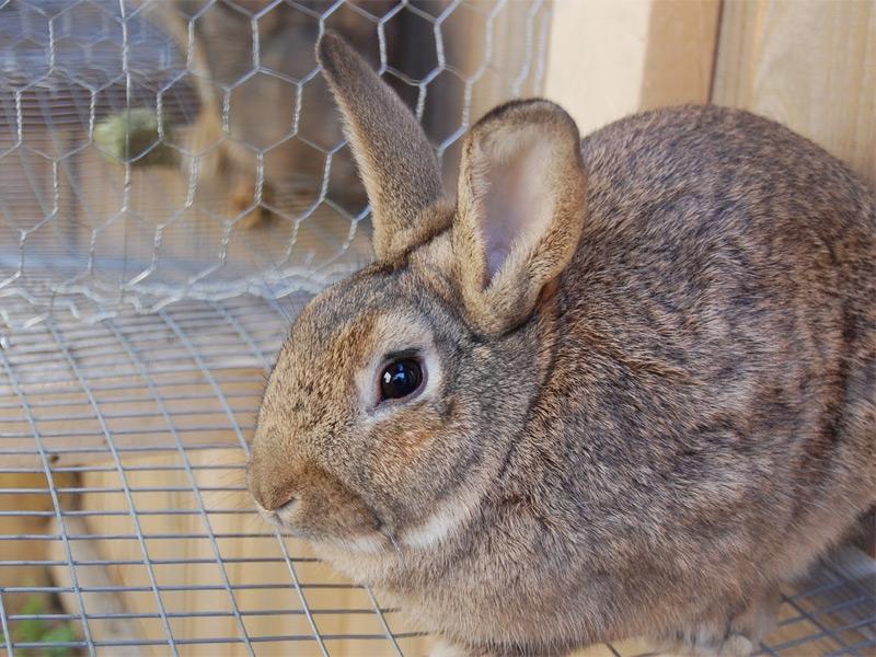 Как сделать клетку для кролика своими руками?