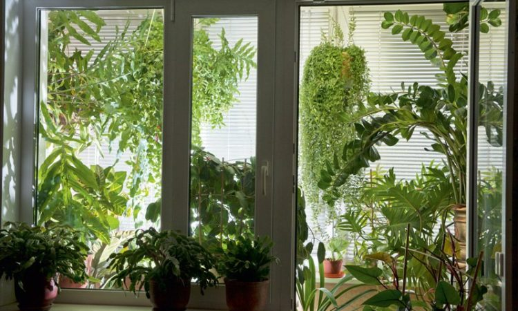 Композиция растений : способ исправления плохого вида с окна.