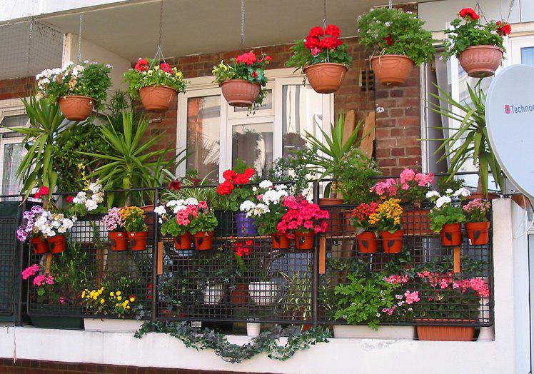 Выращивание цветов с другой стороны окна : решение для исправления неприятного вида.