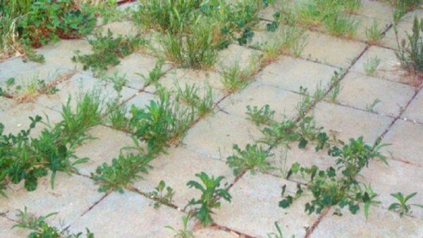 Раствор убьет сорняки на дворовой территории