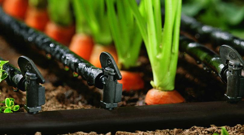 Капельный полив может осуществляться вместе с подкормкой для растений