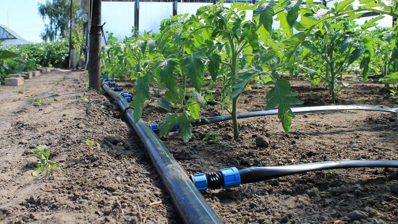Система капельного полива для растений на даче