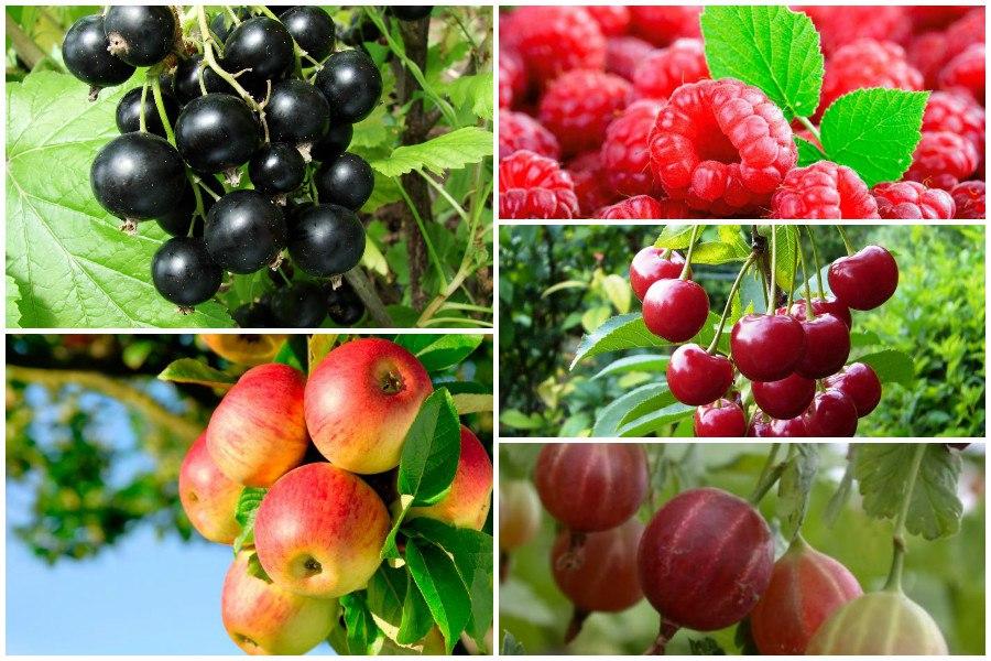 Совместимость плодово-ягодных культур