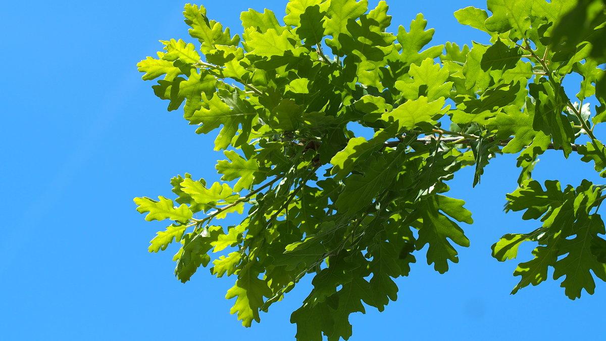 Листва на ветвях насыщенно зеленого цвета