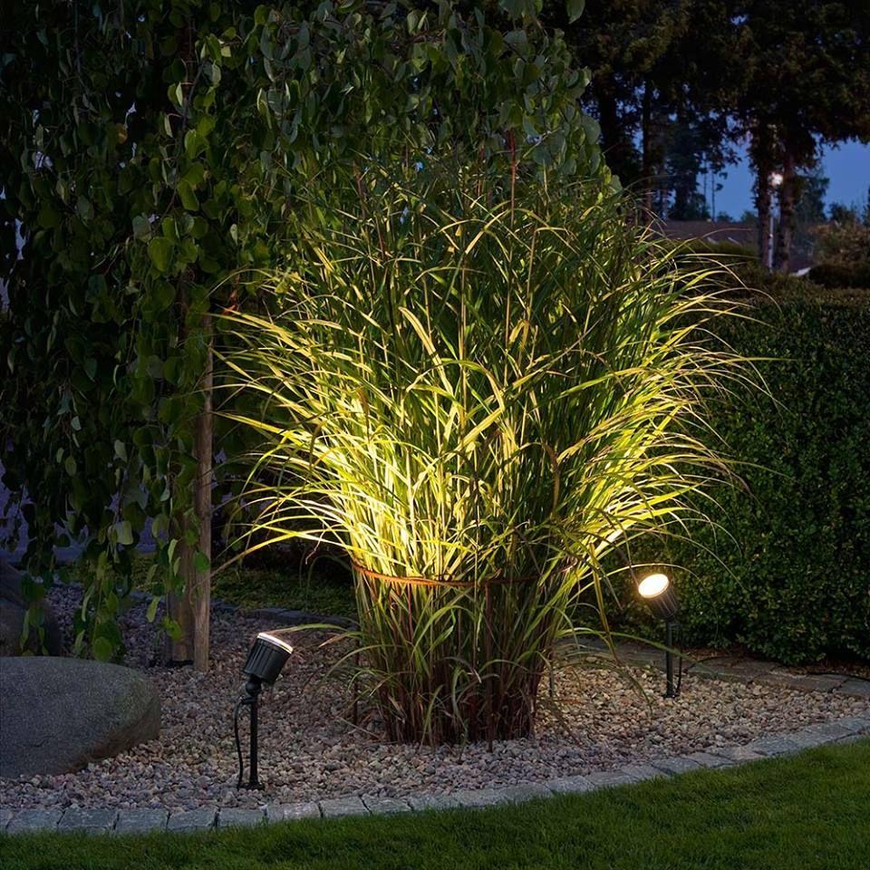 Подсветка кустарника в саду
