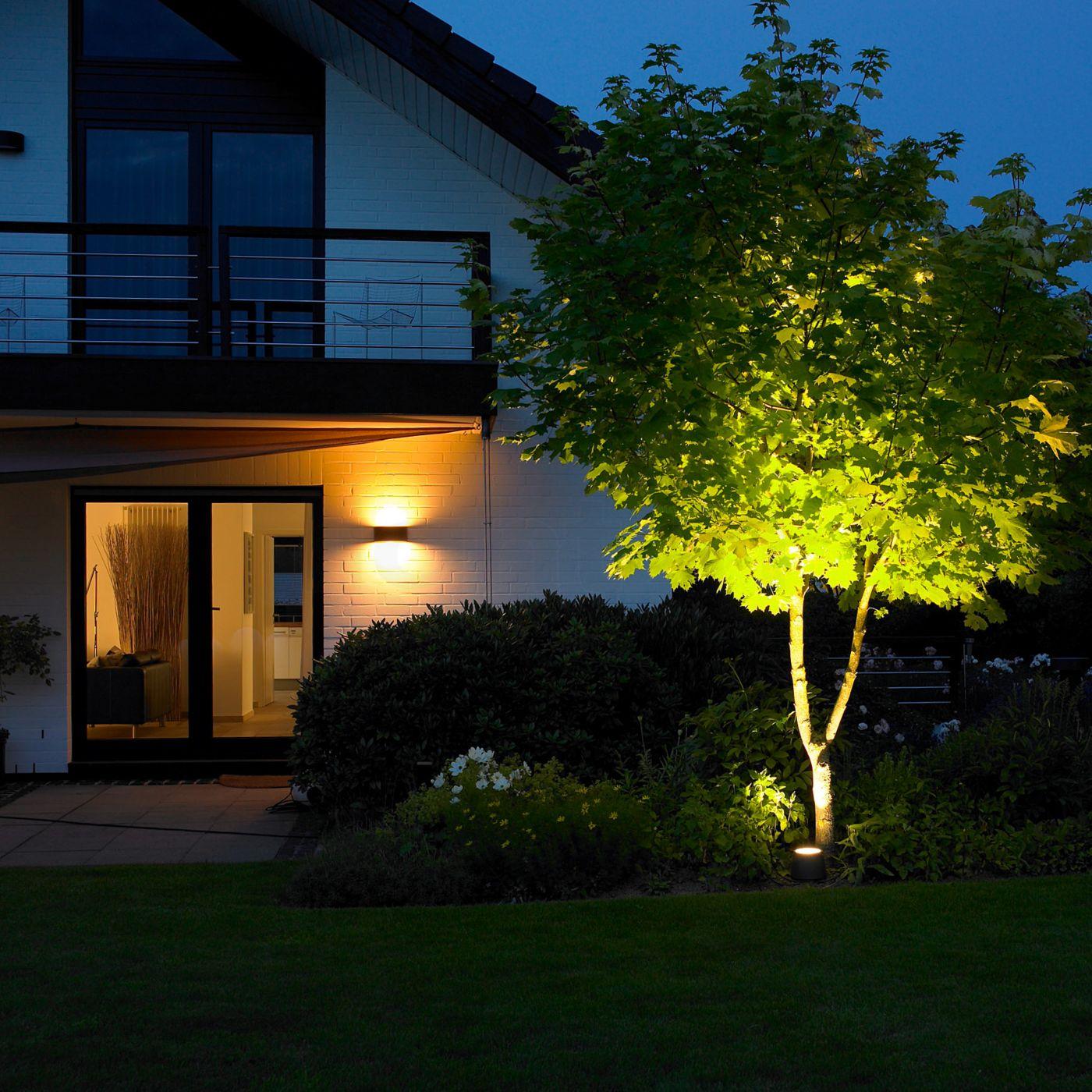 Подсветка дерева в саду