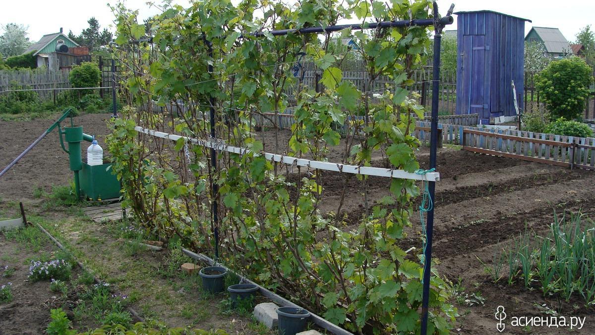 Опора для винограда своими руками