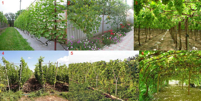 Виды опор своими руками для винограда