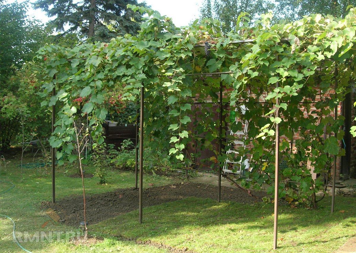 Арка для винограда на даче
