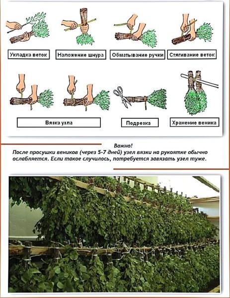 Как правильно вязать банные веники из березы