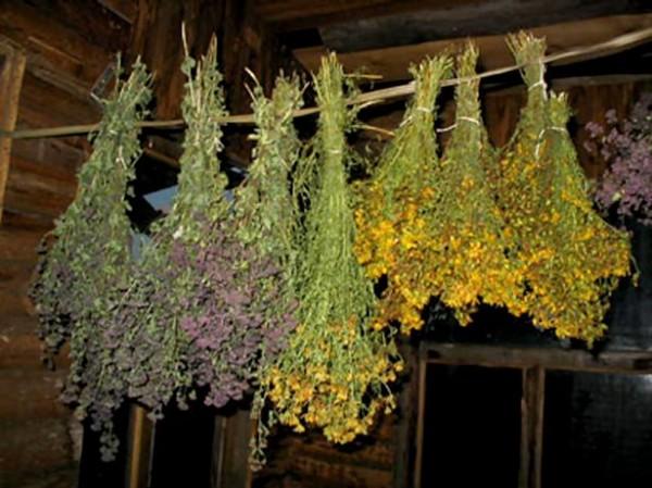 Лекарственные травы для бани
