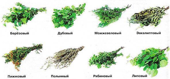 Основные виды банных веников.