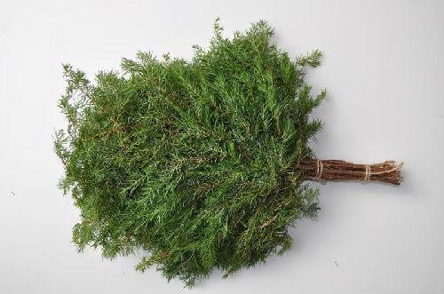 Вечнозеленый можжевельник