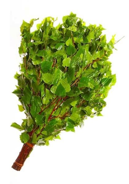 Веник из ветвей березы