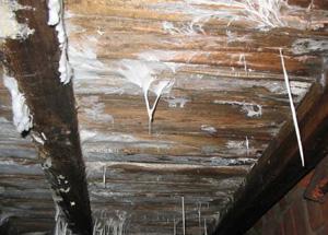 Вредный для человеческого организма грибок, который образуется на незащищенных деревянных поверхностях